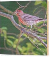 Cardinal Bird In The Wild In South Carolina Wood Print