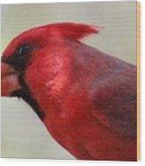 Cardinal Closeup D-bn2 Wood Print