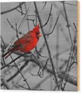 Cardinal Colorized Wood Print