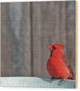 Cardinal Drinking Wood Print