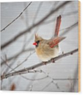 Cardinal Facing A Brisk Wind Wood Print