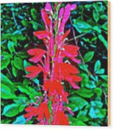 Cardinal Flower Near Schroon River In The Adirondacks-new York  Wood Print