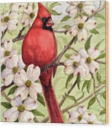 Cardinal In Dogwood Wood Print