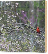 Cardinal In Flowering Tree Wood Print