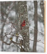 Cardinal In Snow Storm Wood Print
