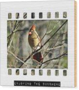 Cardinal In Sunshine Wood Print