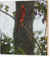 Cardinal In The Crepe Myrtle Wood Print
