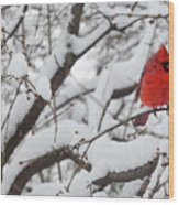 Cardinal In The Snow 3 Wood Print