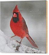 Cardinal In Winter Wood Print