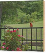 Cardinal On Fence Wood Print