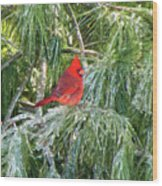 Cardinal On Ice Wood Print