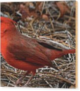 Cardinal On Pine Straw Wood Print