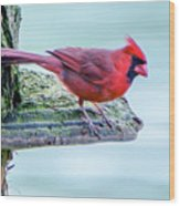 Cardinal Perched Wood Print
