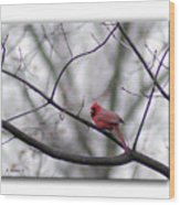 Cardinal Perched On A Branch Wood Print