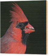 Cardinal Portrait Wood Print