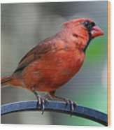 Cardinal Profile Wood Print
