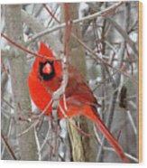 Cardinal Red Wood Print