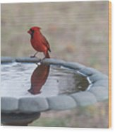 Cardinal Reflection Wood Print