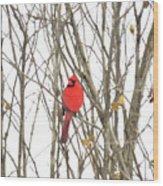 Cardinal Resting Wood Print