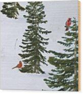 Cardinal Trees Wood Print