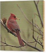 Cardinal With Seed Wood Print