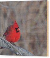 Cardinalis Cardinalis Wood Print