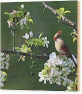 Cardinals In Spring Wood Print