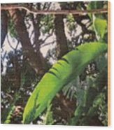 Caribbean Banana Leaf Wood Print