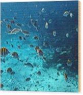 Caribbean Blue_1 Wood Print