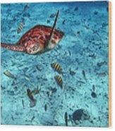 Caribbean Blue_6 Wood Print