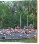 Caribbean Flamingos Wood Print