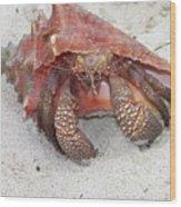 Caribbean Hermit Crab Wood Print