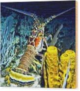 Caribbean Reef Lobster Wood Print