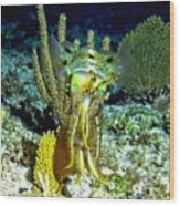 Caribbean Squid At Night - Alien Of The Deep Wood Print
