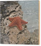 Caribbean Starfish Wood Print