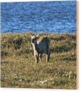 Caribou Fawn Wood Print