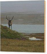 Caribou Fog Wood Print