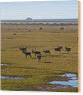 Caribou Herd Wood Print
