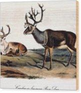 Caribou (rangifer Caribou): Wood Print