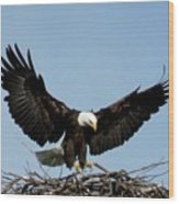 Cape Vincent Eagle Wood Print