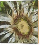 Carline Thistle Wood Print