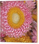 Carmel Flower Wood Print