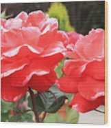 Carmel Mission Roses Wood Print