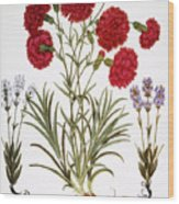 Carnation & Lavender, 1613 Wood Print