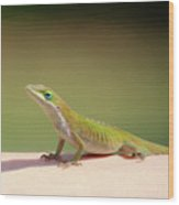 Carolina Anole Wood Print