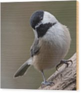 Carolina Chickadee 2 Wood Print