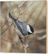 Carolina Chickadee - Birds At Bisset Park Wood Print