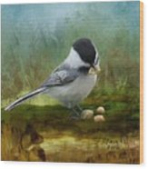 Carolina Chickadee Feeding Wood Print
