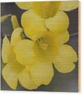 Carolina Jessamine Wood Print