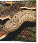 Carolina Mantle Slug Wood Print